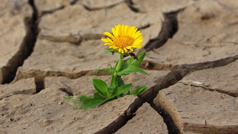 Unchanging Hope in a Everchanging Time